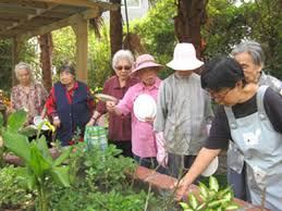 园艺养生 - 阳光园艺组